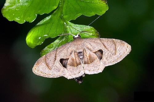 蝴蝶一般色彩鲜艳,翅膀和身体有各种花斑